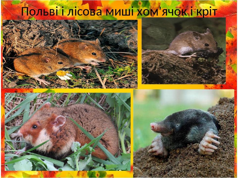 Польві і лісова миші хом'ячок і кріт