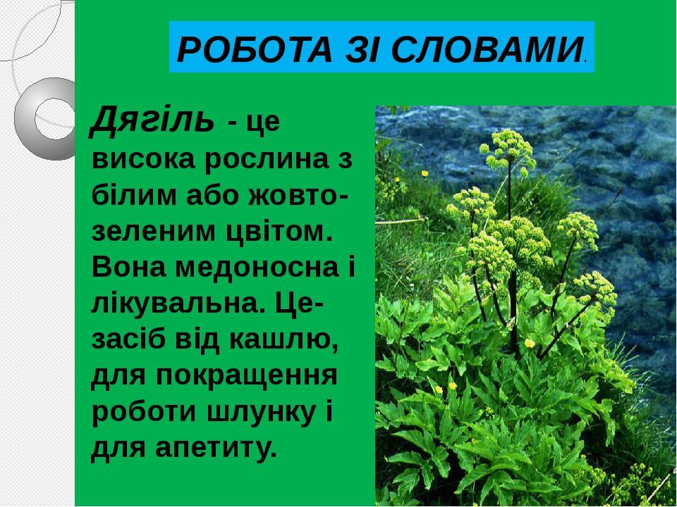 Дягіль - це висока рослина з бiлим або жовто-зеленим цвiтом. Вона медоносна i лiкувальна. Це-засiб вiд кашлю, для покращення роботи шлунку i для ап...