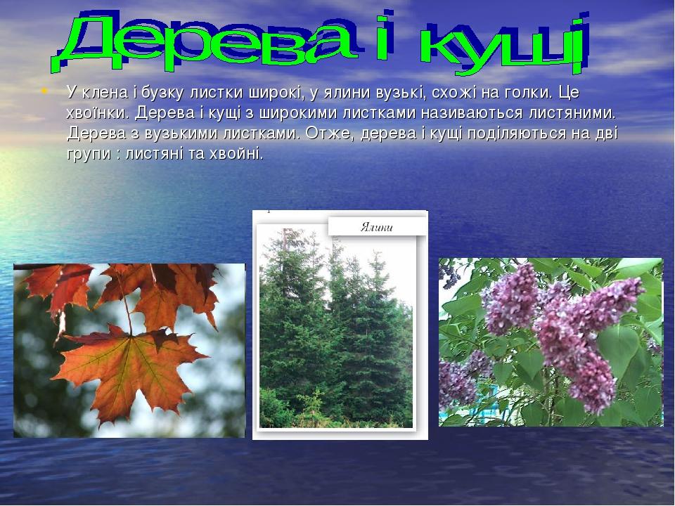 У клена і бузку листки широкі, у ялини вузькі, схожі на голки. Це хвоїнки. Дерева і кущі з широкими листками називаються листяними. Дерева з вузьки...