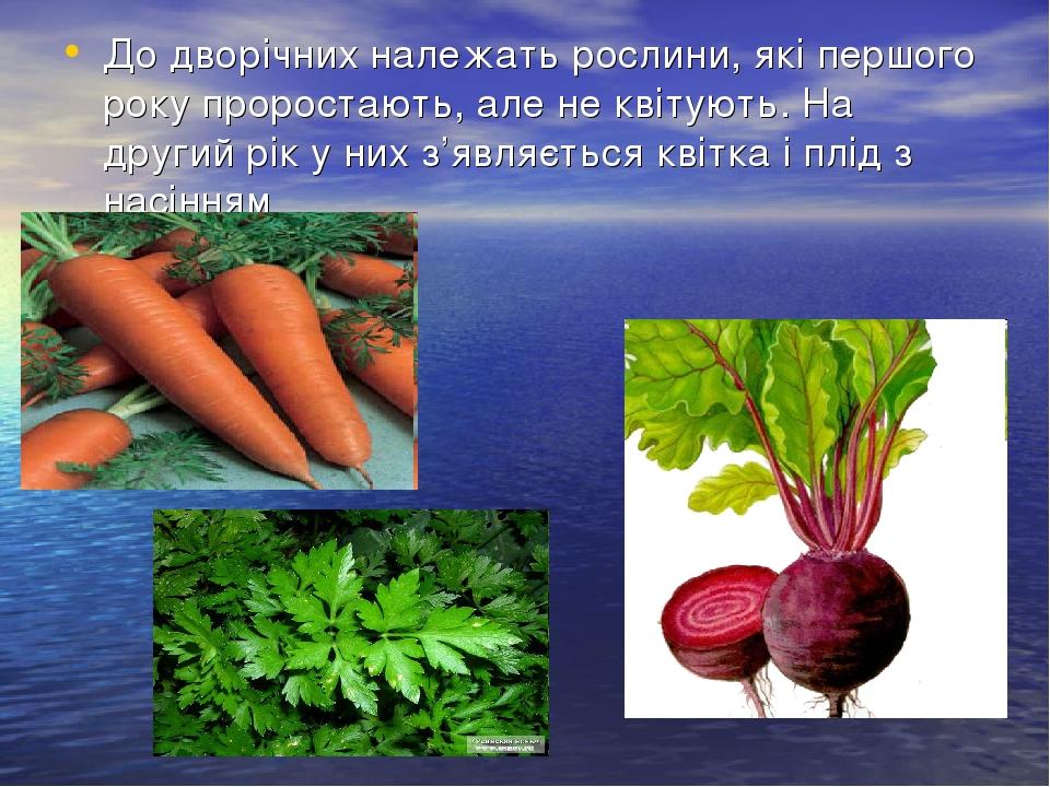 До дворічних належать рослини, які першого року проростають, але не квітують. На другий рік у них з'являється квітка і плід з насінням
