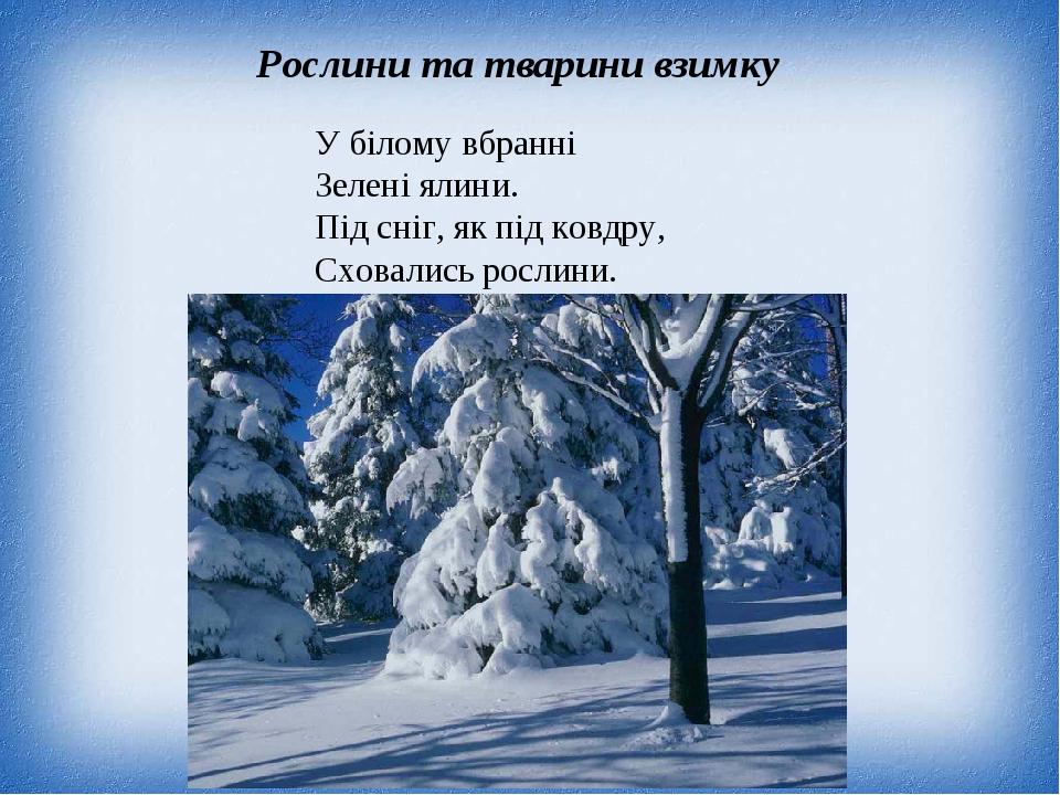 Рослини та тварини взимку У білому вбранні Зелені ялини. Під сніг, як під ковдру, Сховались рослини.