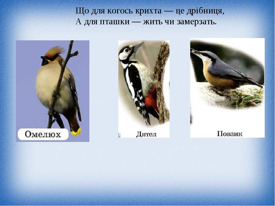Що для когось крихта — це дрібниця, А для пташки — жить чи замерзать.