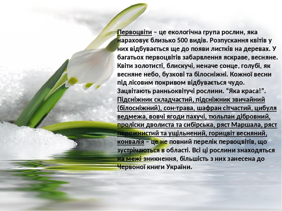 Первоцвіти – це екологічна група рослин, яка нараховує близько 500 видів. Розпускання квітів у них відбувається ще до появи листків на деревах. У б...