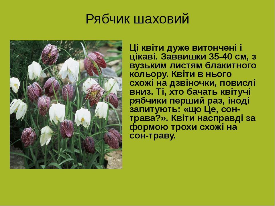 Рябчик шаховий Ці квіти дуже витончені і цікаві. Заввишки 35-40 см, з вузьким листям блакитного кольору. Квіти в нього схожі на дзвіночки, повислі ...