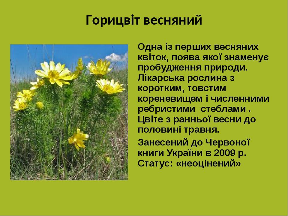 Горицвіт весняний Одна із перших весняних квіток, поява якої знаменує пробудження природи. Лікарська рослина з коротким, товстим кореневищем і числ...
