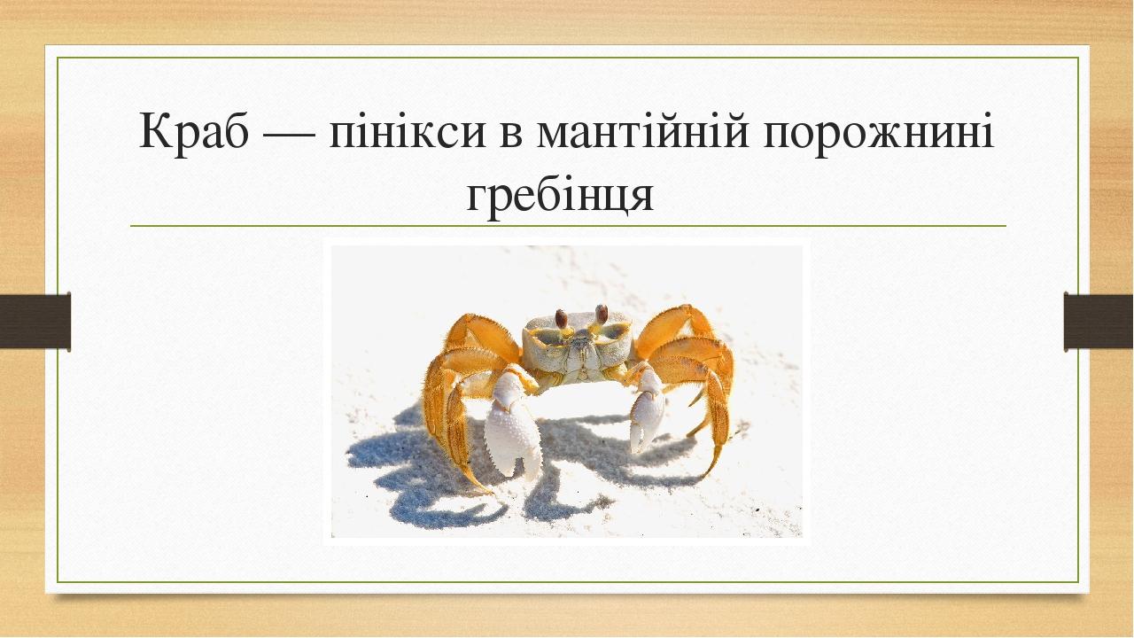 Краб — пінікси в мантійній порожнині гребінця