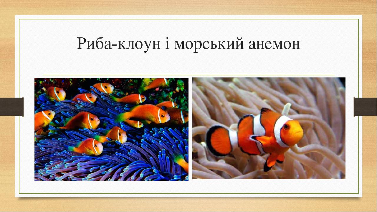 Риба-клоун і морський анемон