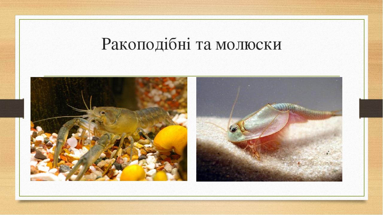Ракоподібні та молюски