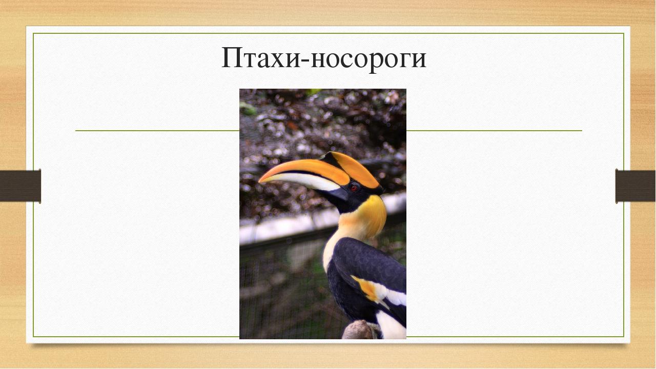 Птахи-носороги