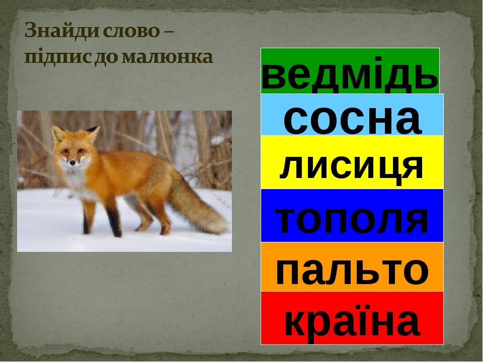 ведмідь сосна лисиця тополя пальто країна