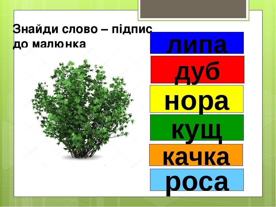 Знайди слово – підпис до малюнка липа дуб нора кущ качка роса