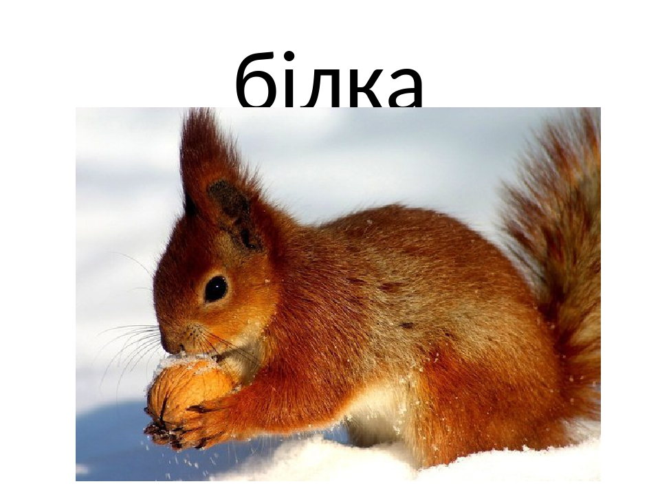 білка