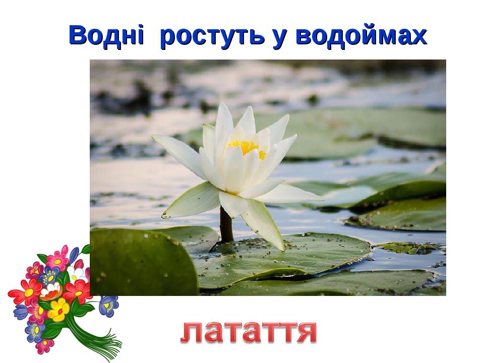 Водні ростуть у водоймах