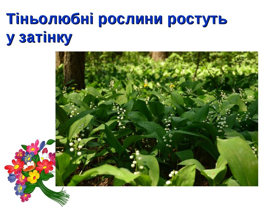 Тіньолюбні рослини ростуть у затінку