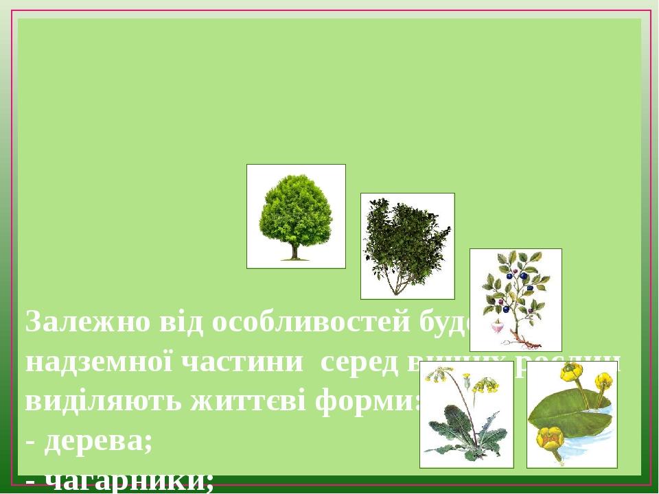 Залежно від особливостей будови надземної частини серед вищих рослин виділяють життєві форми: - дерева; - чагарники; - чагарнички; - наземні трав'я...