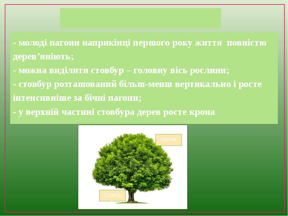 Дерева - молоді пагони наприкінці першого року життя повністю дерев'яніють; - можна виділити стовбур – головну вісь рослини; - стовбур розташований...