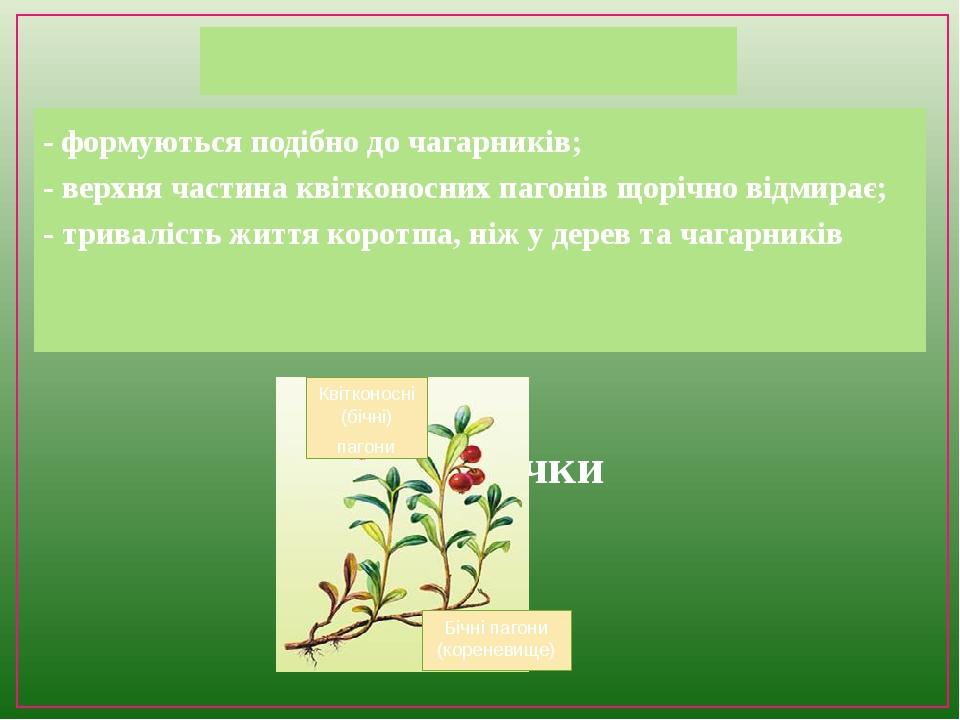 Чагарнички - формуються подібно до чагарників; - верхня частина квітконосних пагонів щорічно відмирає; - тривалість життя коротша, ніж у дерев та ч...