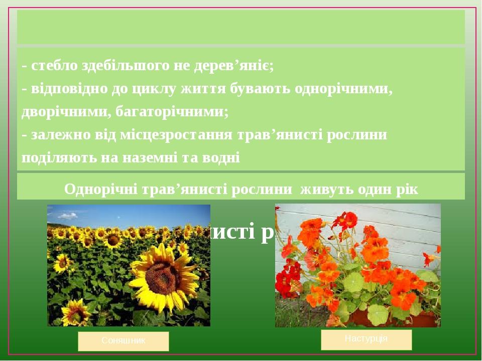 Трав'янисті рослини - стебло здебільшого не дерев'яніє; - відповідно до циклу життя бувають однорічними, дворічними, багаторічними; - залежно від м...