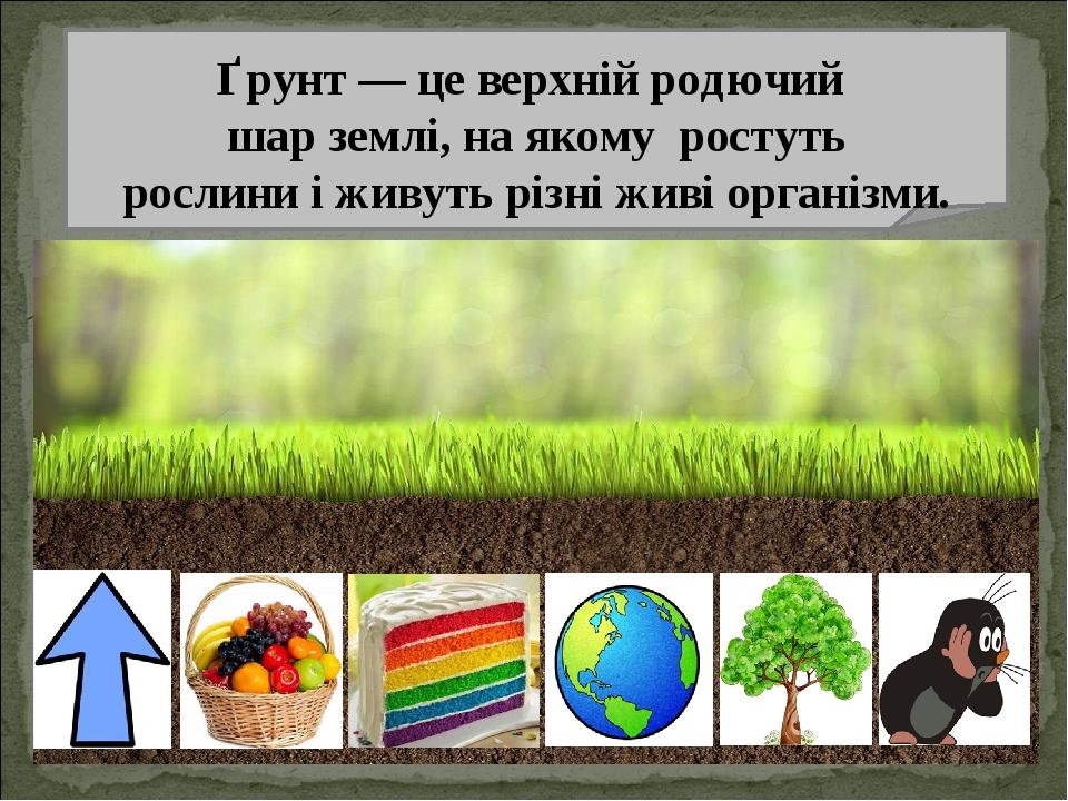 Ґрунт — це верхній родючий шар землі, на якому ростуть рослини і живуть різні живі організми.