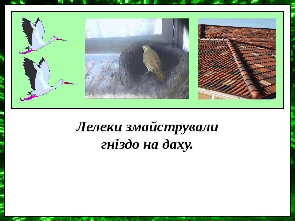 Лелеки змайстрували гніздо на даху.