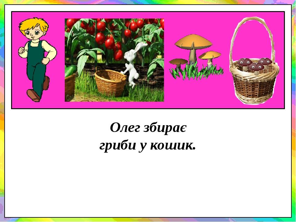 Олег збирає гриби у кошик.