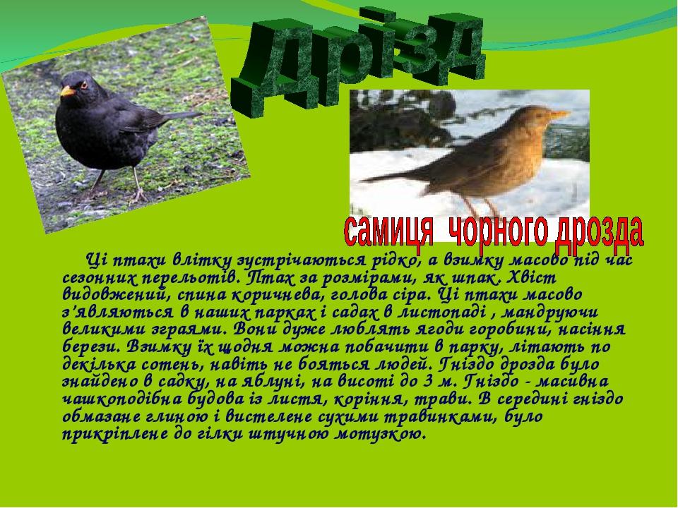 Ці птахи влітку зустрічаються рідко, а взимку масово під час сезонних перельотів. Птах за розмірами, як шпак. Хвіст видовжений, спина коричнева, го...