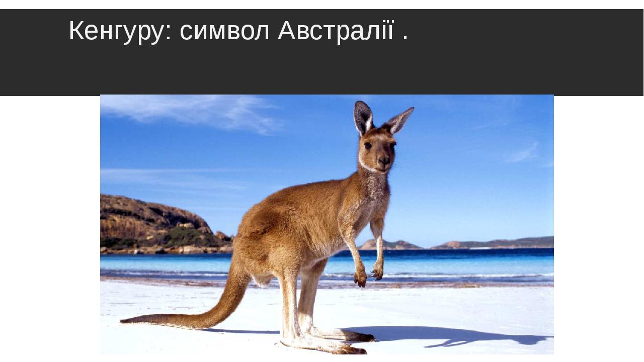 Кенгуру: символ Австралії .