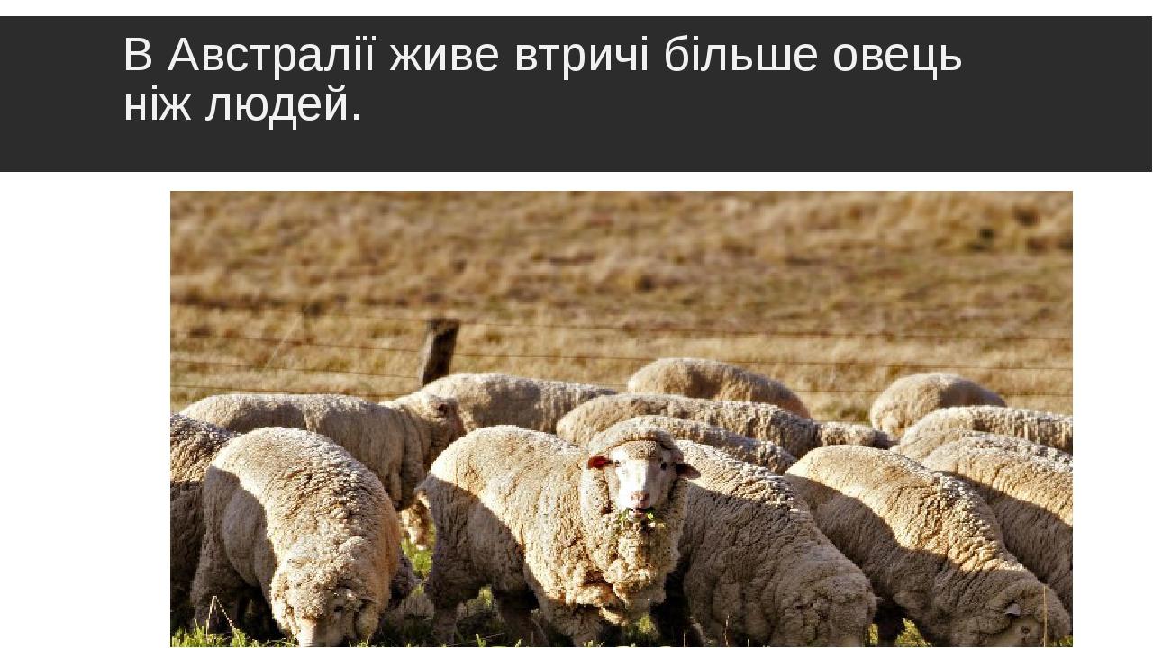 В Австралії живе втричі більше овець ніж людей.