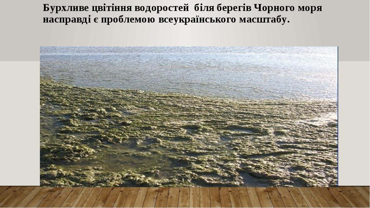 Бурхливе цвітіння водоростей біля берегів Чорного моря насправді є проблемою всеукраїнського масштабу.