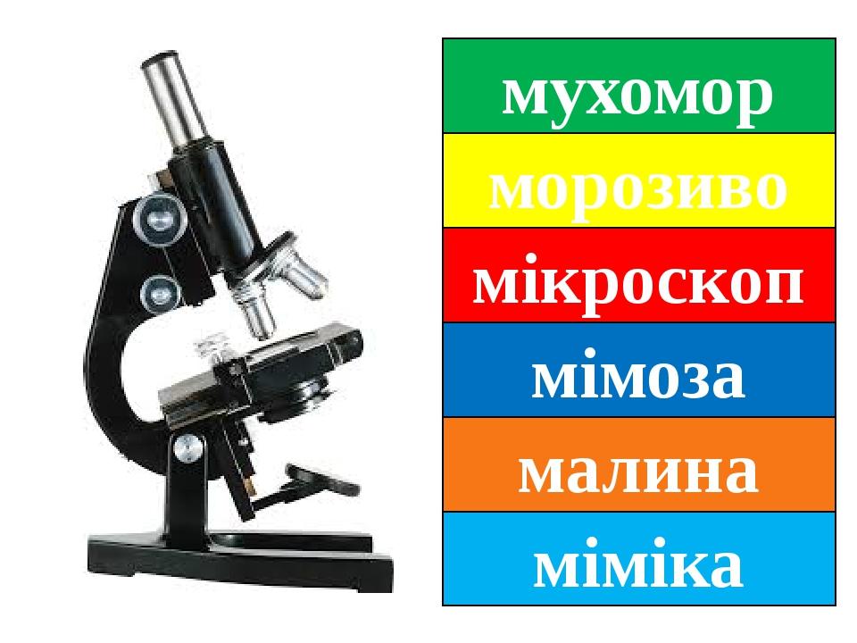 мухомор морозиво мікроскоп мімоза малина міміка