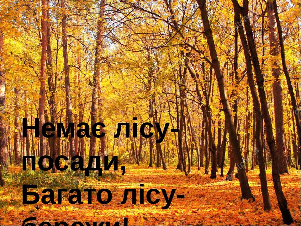 Немає лісу- посади, Багато лісу- бережи!