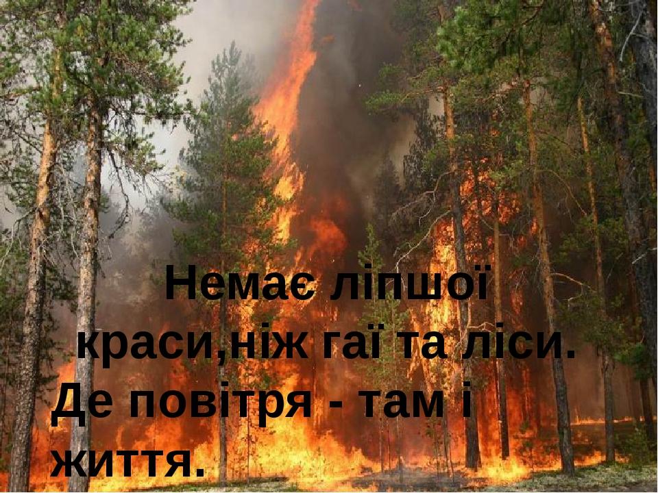 Немає ліпшої краси,ніж гаї та ліси. Де повітря - там і життя.