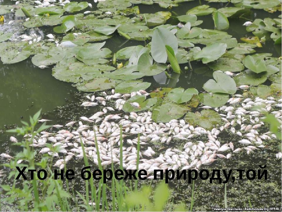 Хто не береже природу,той шкодить сам собі.