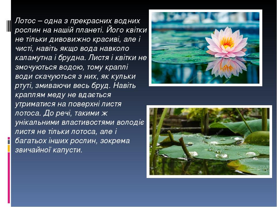 ... Лотос – одна з прекрасних водних рослин на нашій планеті. Його квітки  не тільки дивовижно ... d54e3ebf84e98