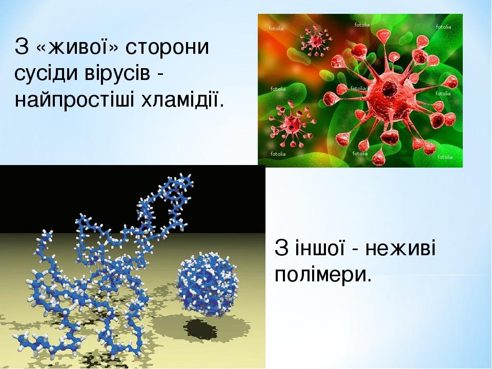 З «живої» сторони сусіди вірусів - найпростіші хламідії. З іншої - неживі полімери.