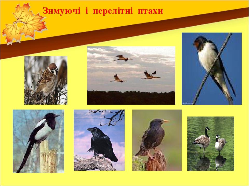 Зимуючі і перелітні птахи