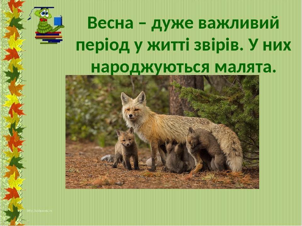Весна – дуже важливий період у житті звірів. У них народжуються малята.