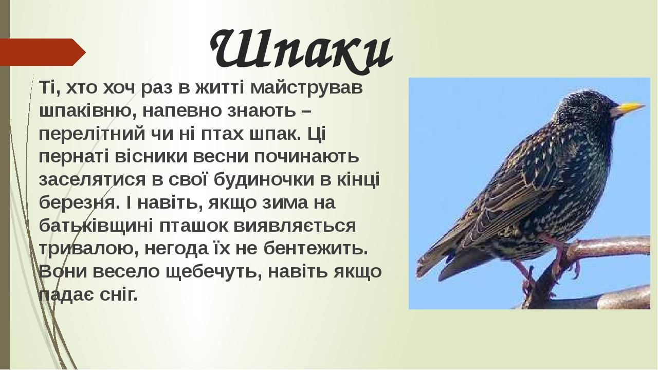 Шпаки Ті, хто хоч раз в житті майстрував шпаківню, напевно знають – перелітний чи ні птах шпак. Ці пернаті вісники весни починають заселятися в сво...