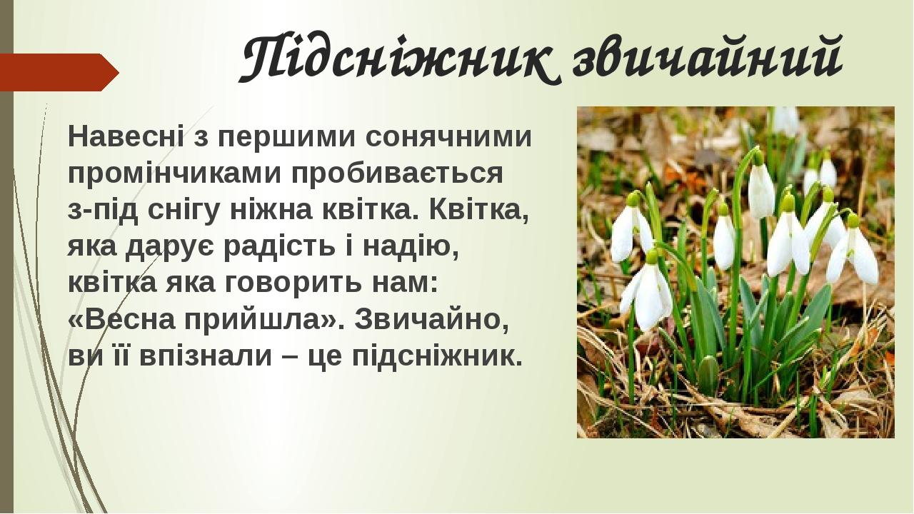 Підсніжник звичайний Навесні з першими сонячними промінчиками пробивається з-під снігу ніжна квітка. Квітка, яка дарує радість і надію, квітка яка ...