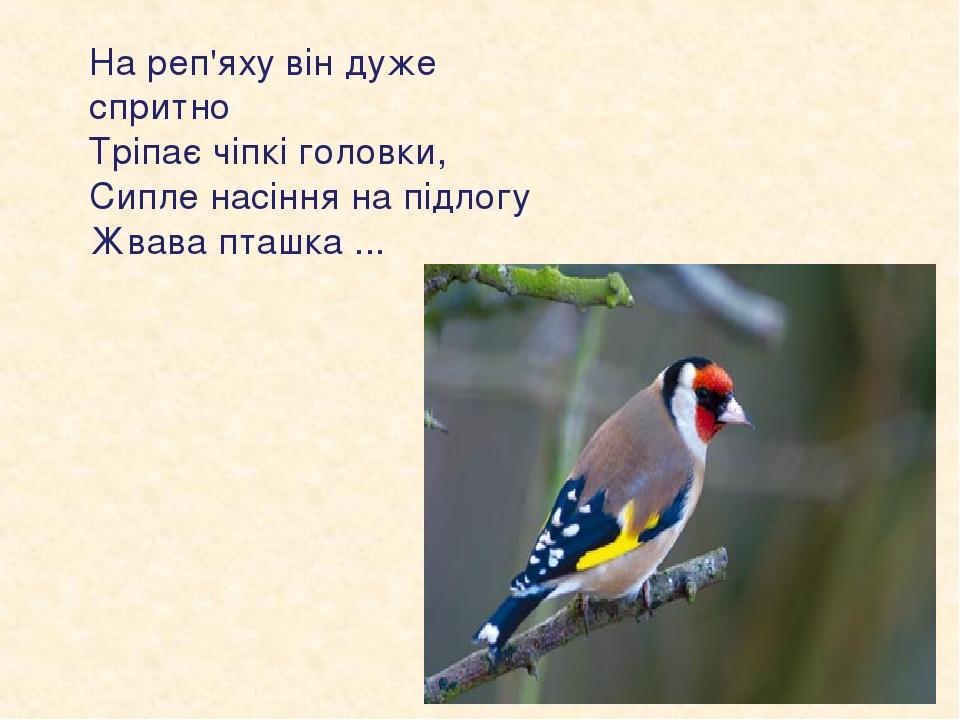 На реп'яху він дуже спритно Тріпає чіпкі головки, Сипле насіння на підлогу Жвава пташка ...
