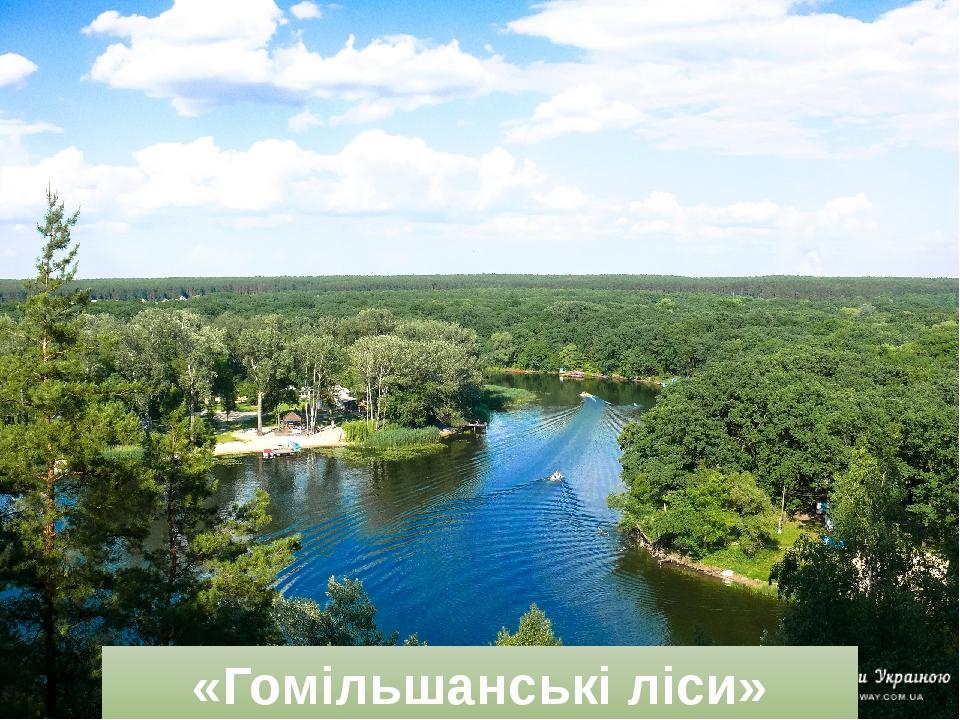 Картинки по запросу «Гомільшанські ліси»