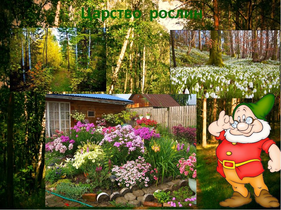 Царство рослин
