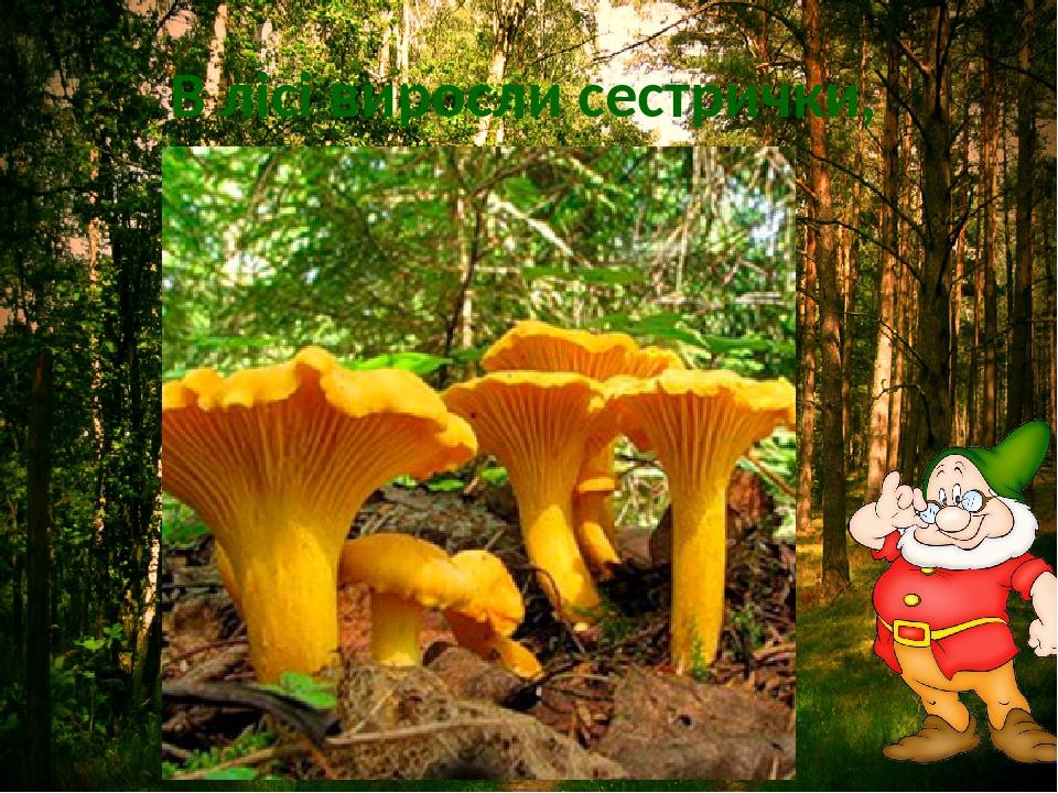 В лісі виросли сестрички, Жовті та смачні…