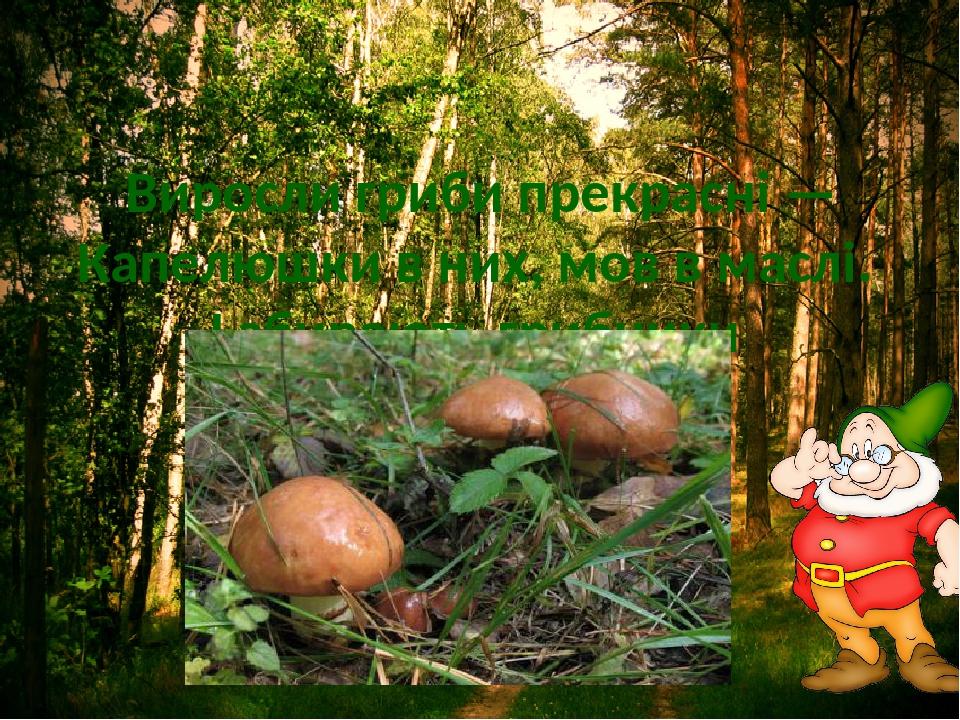 Виросли гриби прекрасні — Капелюшки в них, мов в маслі. І збирають грибники Маслянисті …