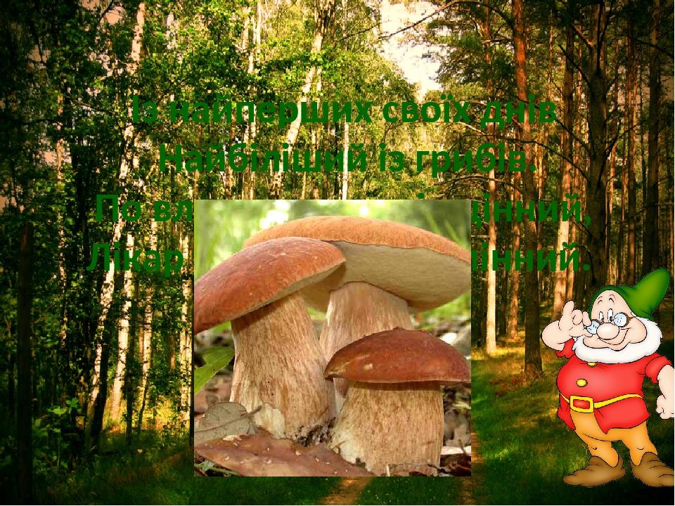 Із найперших своїх днів Найбіліший із грибів. По властивостях він цінний, Лікар від хвороб відмінний.