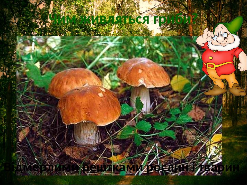 Чим живляться гриби? Відмерлими рештками рослин і тварин