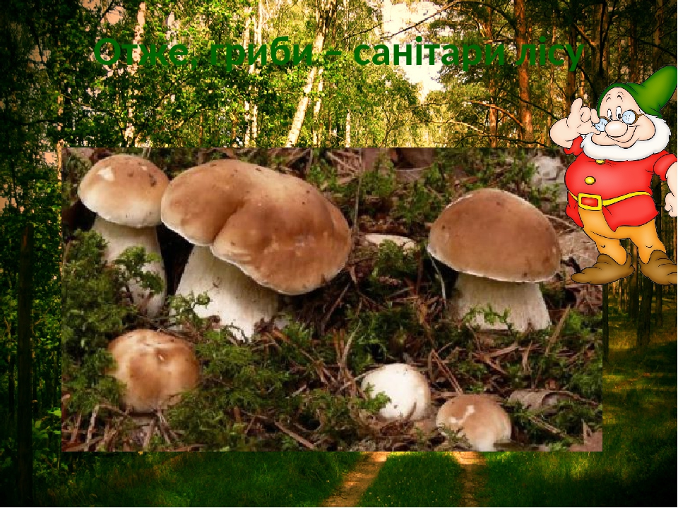 Отже, гриби – санітари лісу