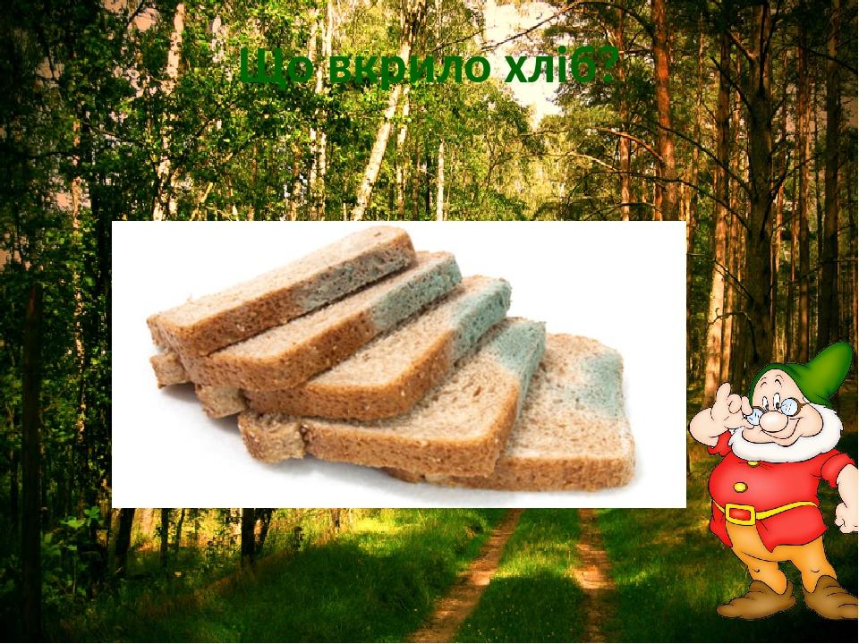 Що вкрило хліб?
