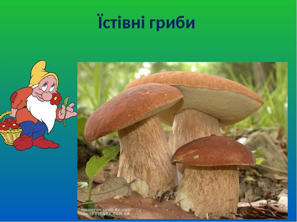 Їстівні гриби