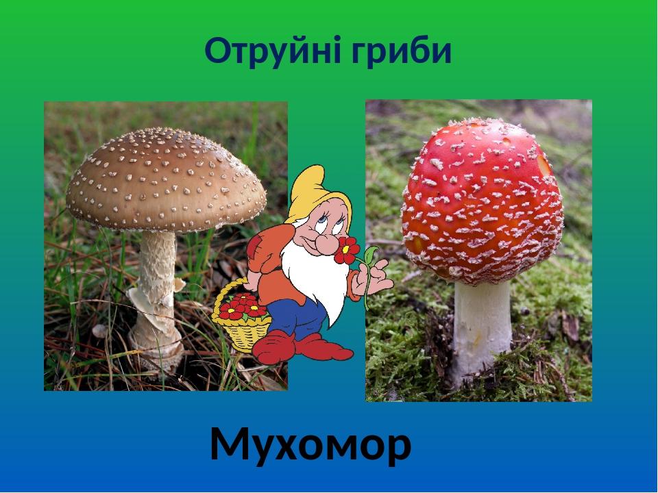 Отруйні гриби Мухомор